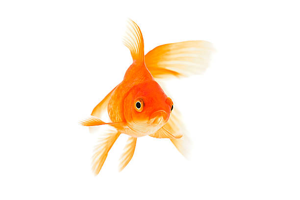 К чему снится Рыба во сне